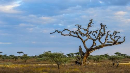 Tanzania-196